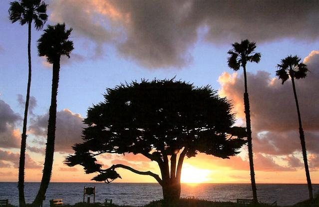 Tree on the ocean shoreline at sunset